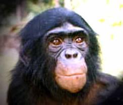 Ce singe est un...