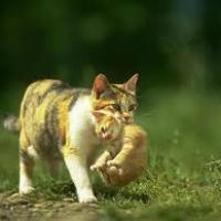 Tiens on a retrouvé le chat de la question 3, la mère du chaton est...